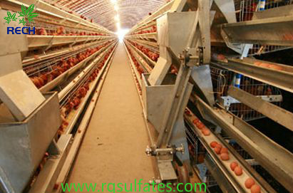 The ferrous sulfate dosage in chicken feed